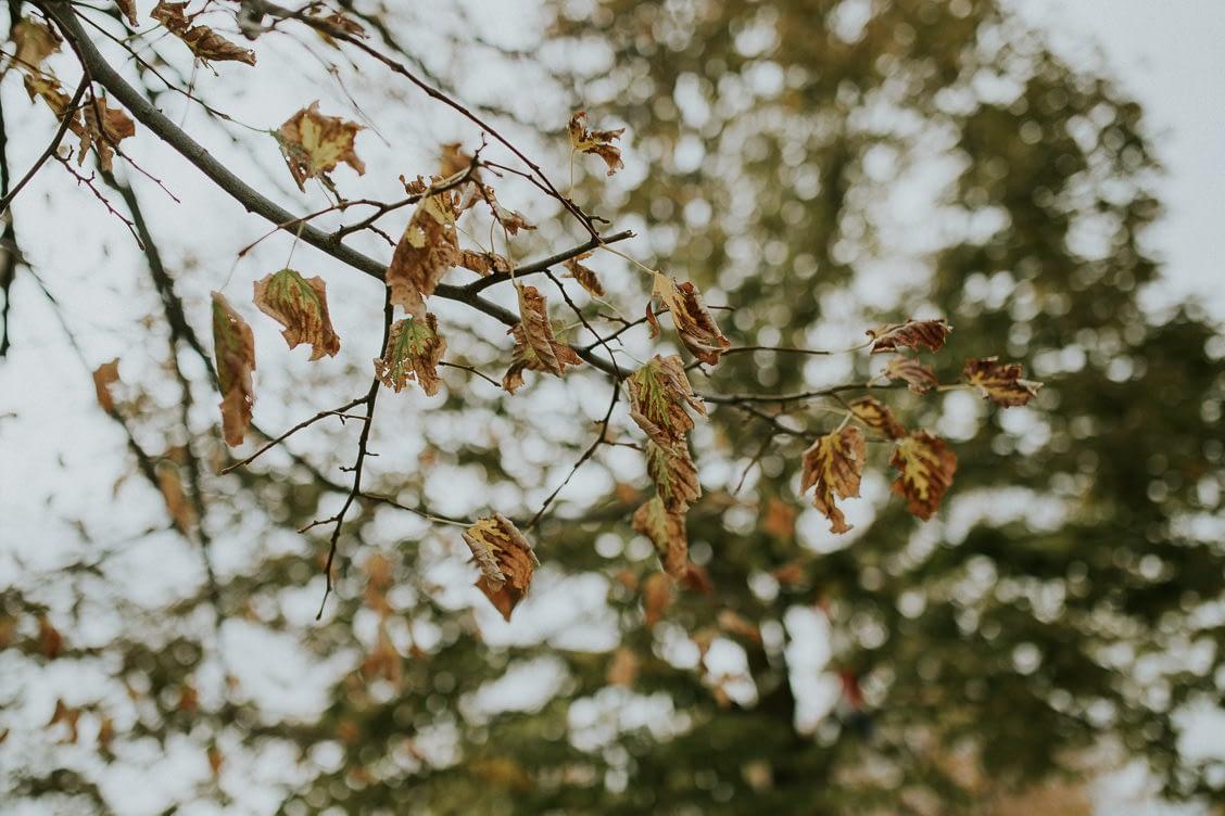 mariage automne beaute couleurs photographe